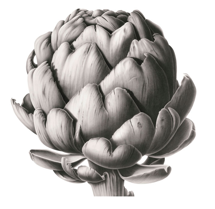 Artichoke Head in Charcoal
